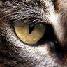 cat-eye.jpg