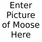 BenTheMoose