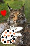 220px-Lynx_lynx_poing (copy).jpg