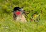 alpine-marmot2-.jpg