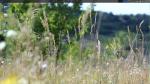 animated-xfce4-desktop1.png