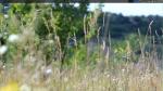 animated-xfce4-desktop2.png