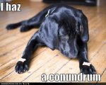 funny-dog-pictures-biscuit-conundrum.jpg