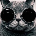 geekcat.png
