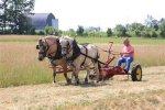 horsesickle.jpg