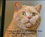 omg_wtf-cat.jpg